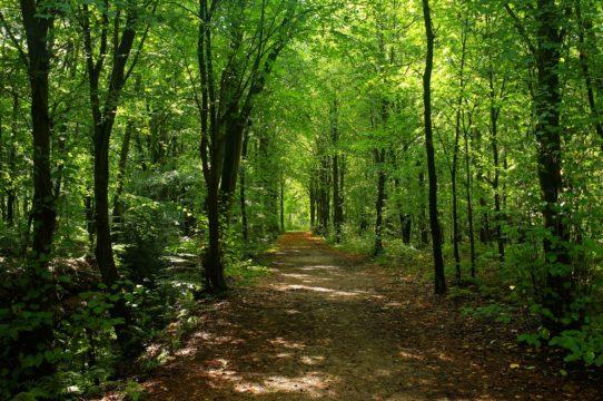 Saint Germain en Laye's Forest